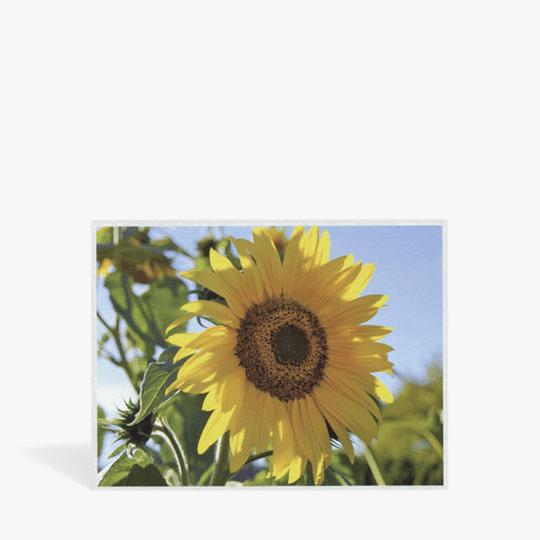 PAL_Wordpress-Shop_Beitragsbild_Kalenderrueckwand_Sonnenblume