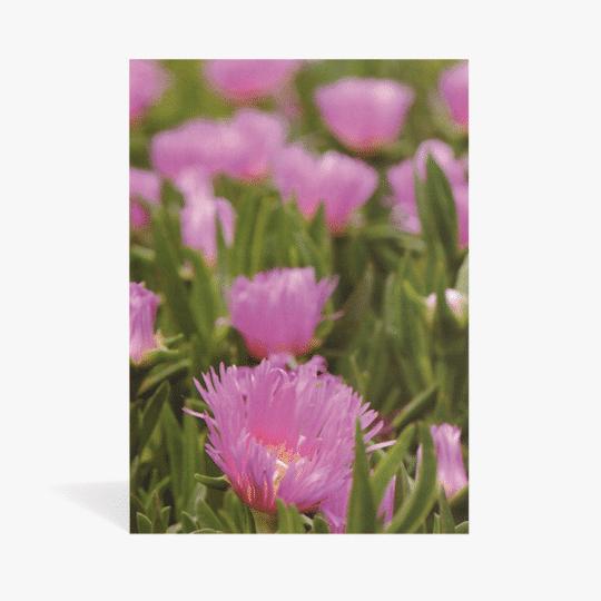 PAL_Wordpress-Shop_Beitragsbild_Kalenderrueckwand_Violette_Blueten