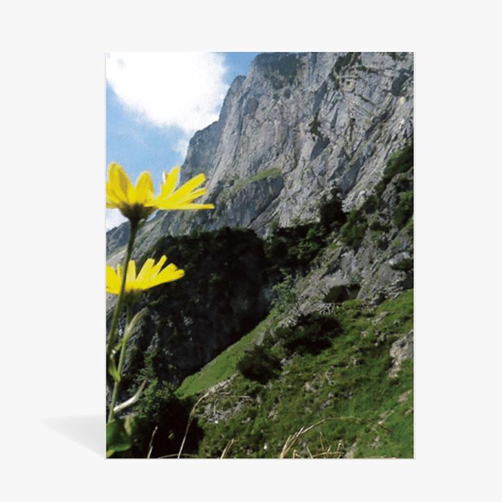 PAL_Wordpress-Shop_Beitragsbild_Kalenderrueckwand_Alpenblume